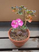 rinmonha pinku 02-20191124-02.jpg